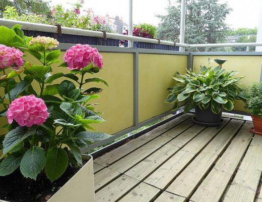 Sommersezne auf einem Balkon mit Hortensie und Hosta