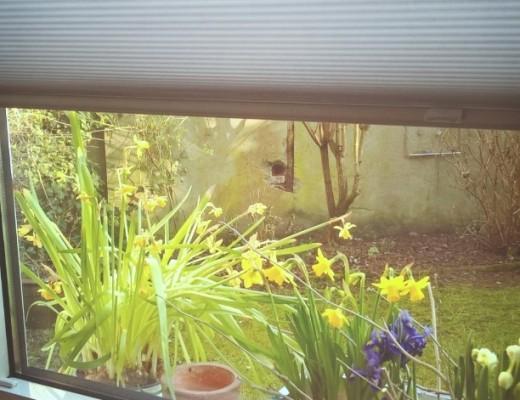 Frühlingsblumen auf einem Fensterbrett Narzissen, Iris, Hyazinthen Dahinter ein Blick in einen Garten