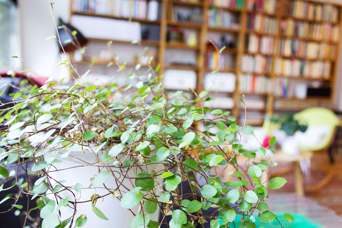 Grüne Pflanze vor einem Bücherregal
