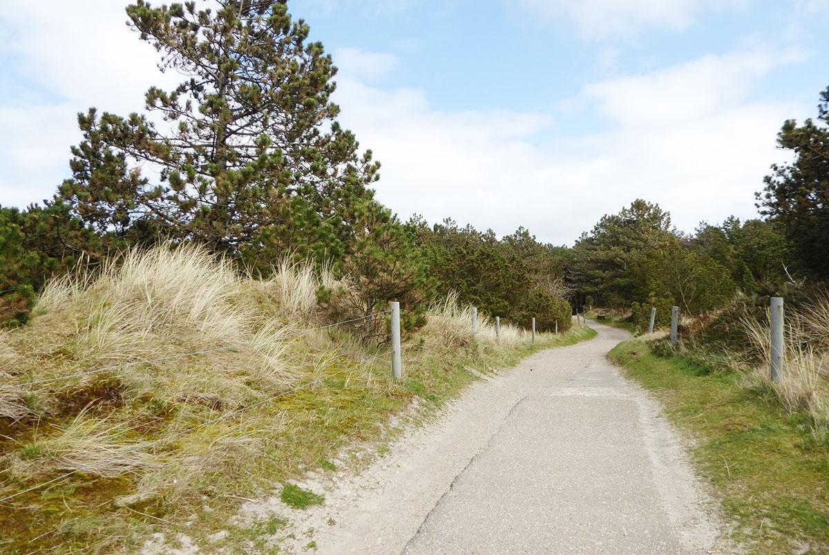 Küstenwald St. Peter-Ording