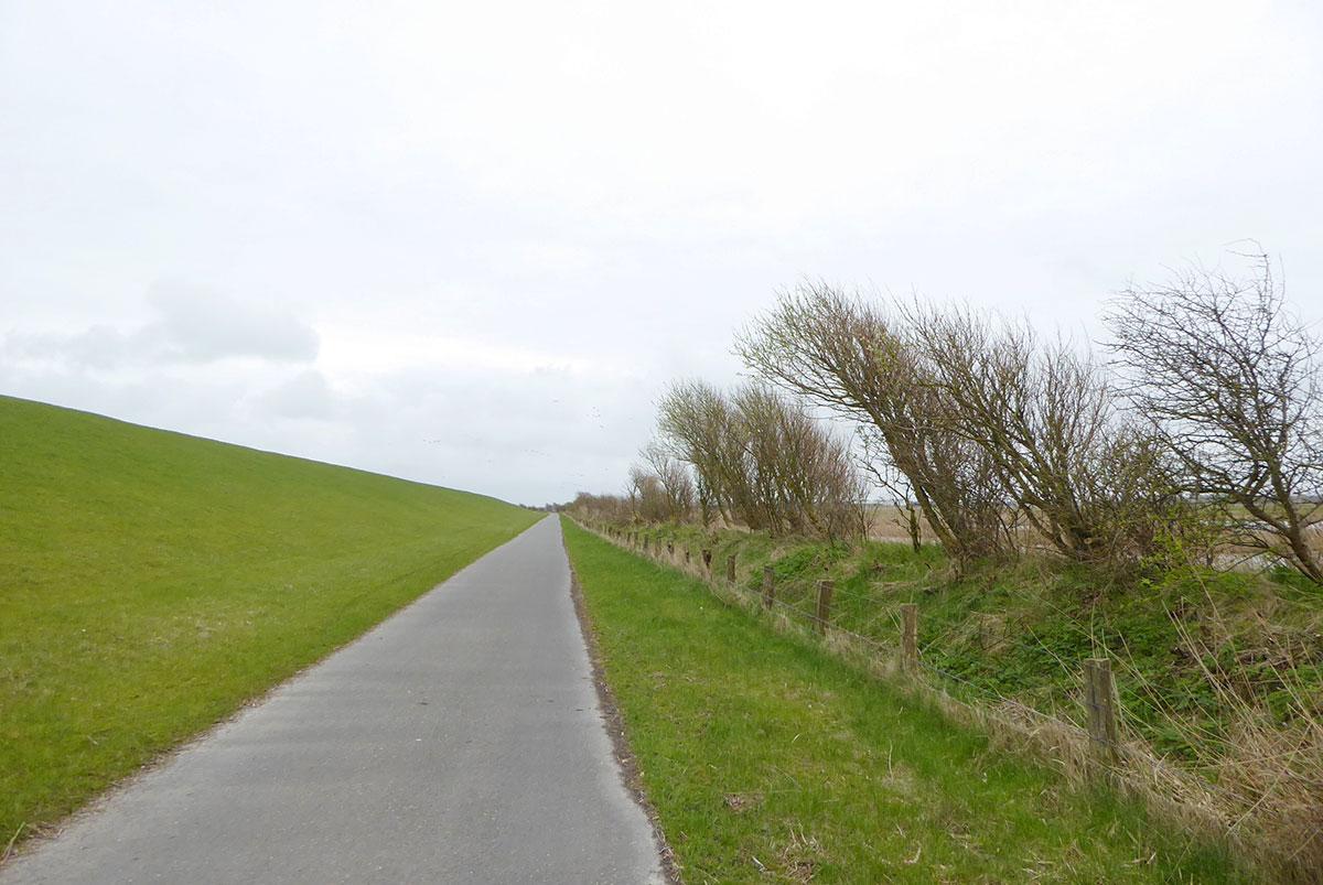 In Schleswig-Holstein ein Radweg hinterm Deich, parallel dazu ein Entwässerungsgraben