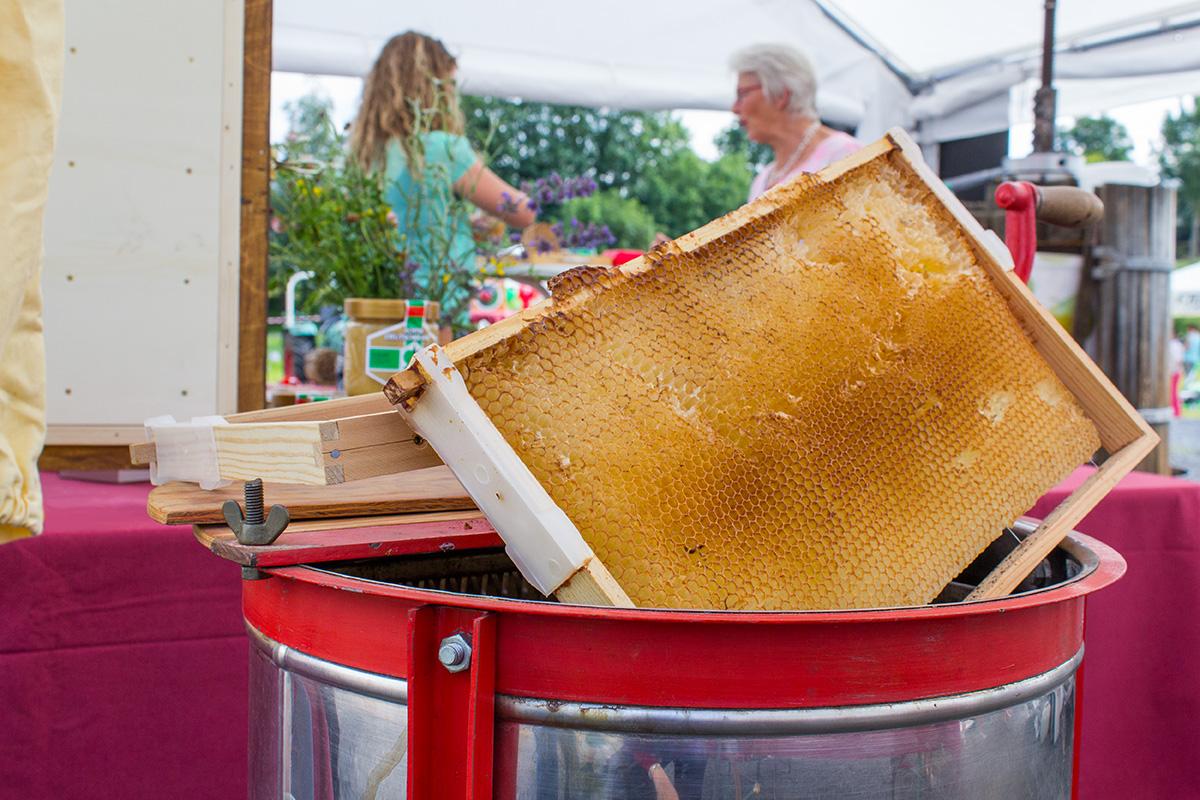 Eine Bienenwabe steckt in einem Metallbehälter