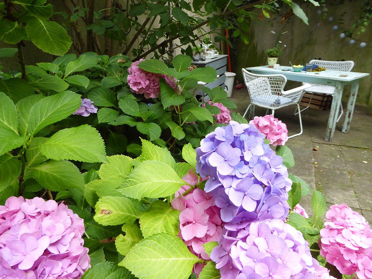 Hortensien in verschiedenen Farben dahinter ein Gartentisch mit Stühen