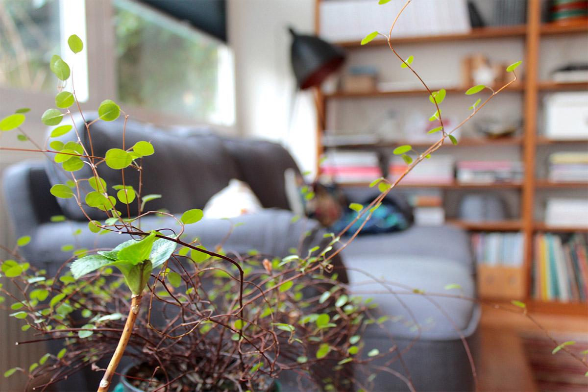 Eine Pflanze im Vordergrund, dahinter ein Sofa