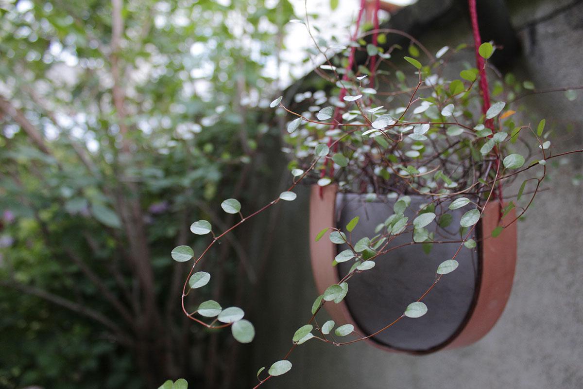 Mühlenbeckia in einem selbstgebastelten Blumentopfhalter aus Lederresten und Paketschnur