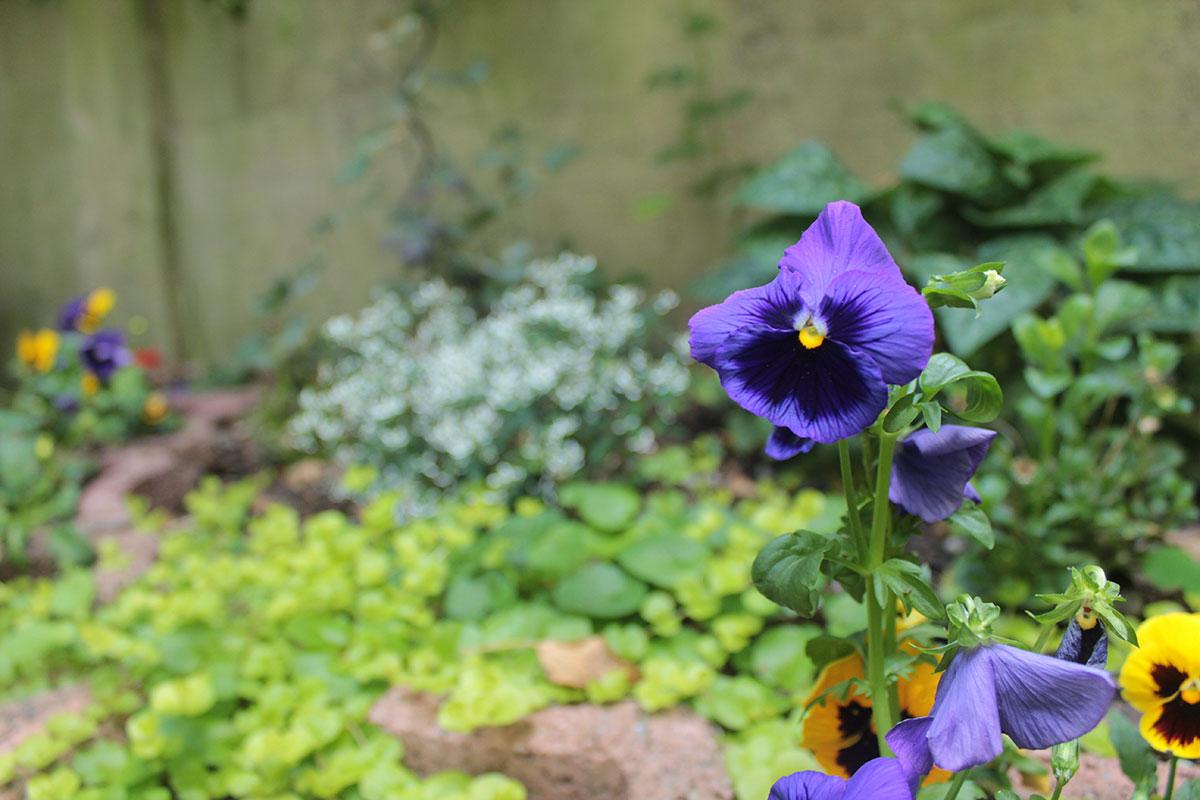 Ein Blumenbeet in einem Garten