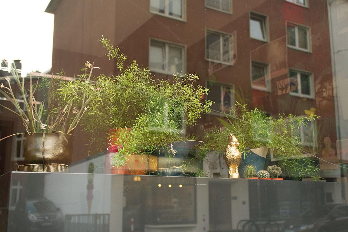 Blick in ein Schaufenster mit diversen Grünpflanzen und Dekogegenständen aufgenommen im Klinikviertel Dortmund