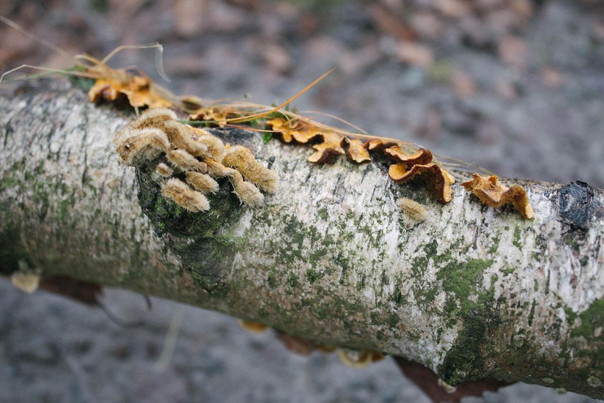 Flechten und Pilze auf einem abgestorbenen Baumstamm