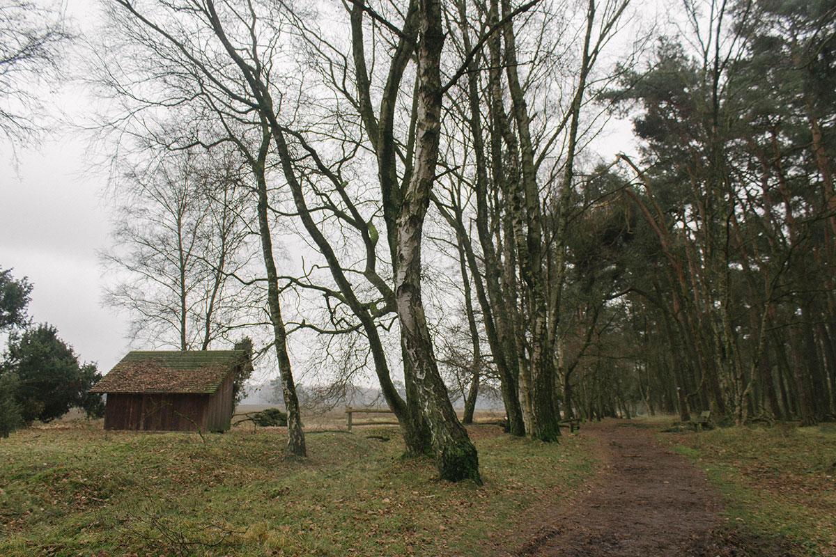 Heidelandschaft in Haltern am See