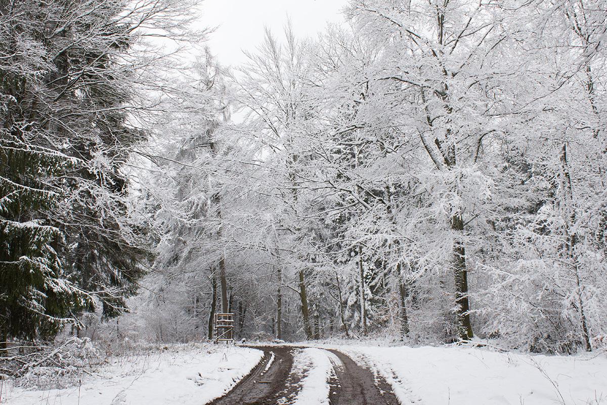 Verschneite Waldlandschaft auf dem Rothaarsteig