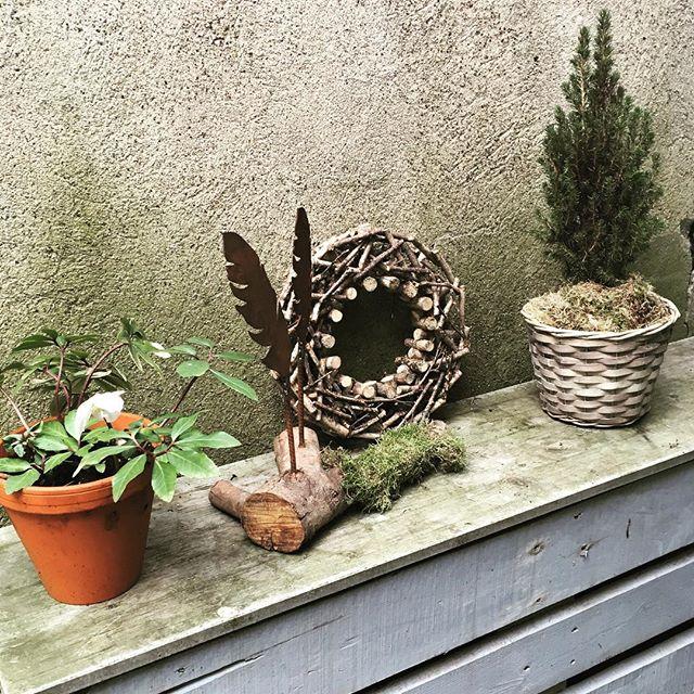 Ein Gartenstillleben aus einer Christrose, verrosteten Federn, einem Kranz aus Ästen und einer kleinen Konifere