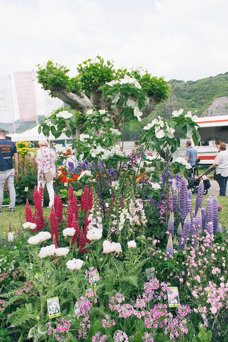 Ein buntes Blumenbeet aus Lupinen, Mohn und Phlox