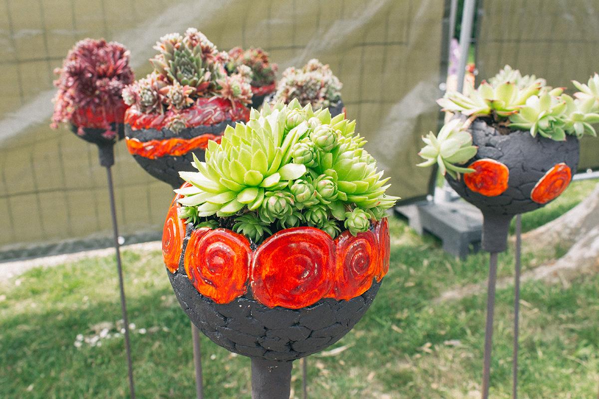 Sedumgewächse in tönernen Blumenbehältern