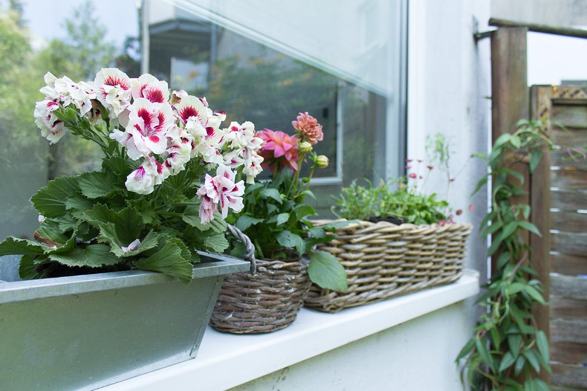 Bunte Gartenblumen auf einer Fensterbank