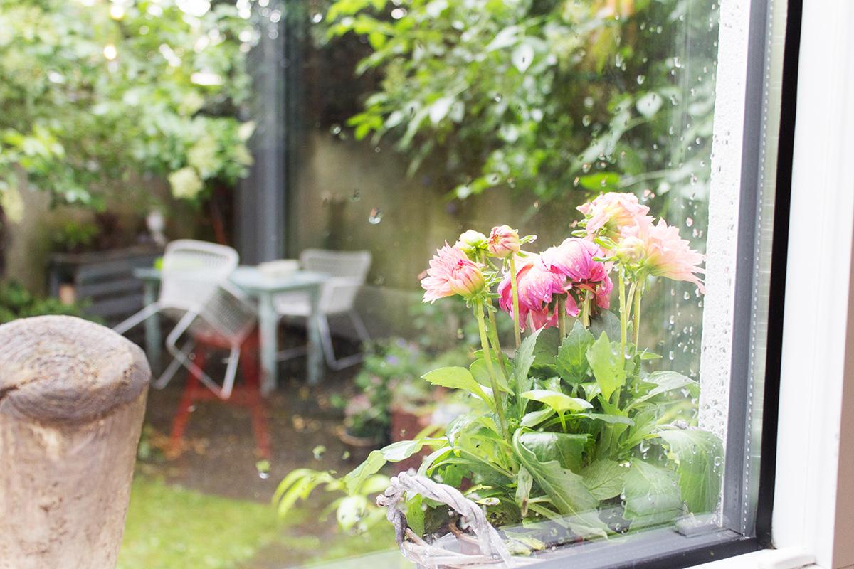 Ausblick aus einem Fenster mit Regentropfen, davor steht eine pinkfarbene Dahlie