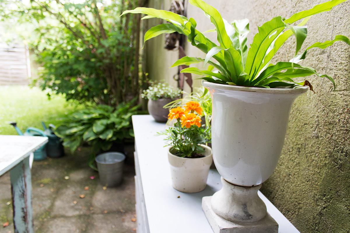 Ein Farn und eine Tagetes stehen in einem Garten auf einem Pflanztisch