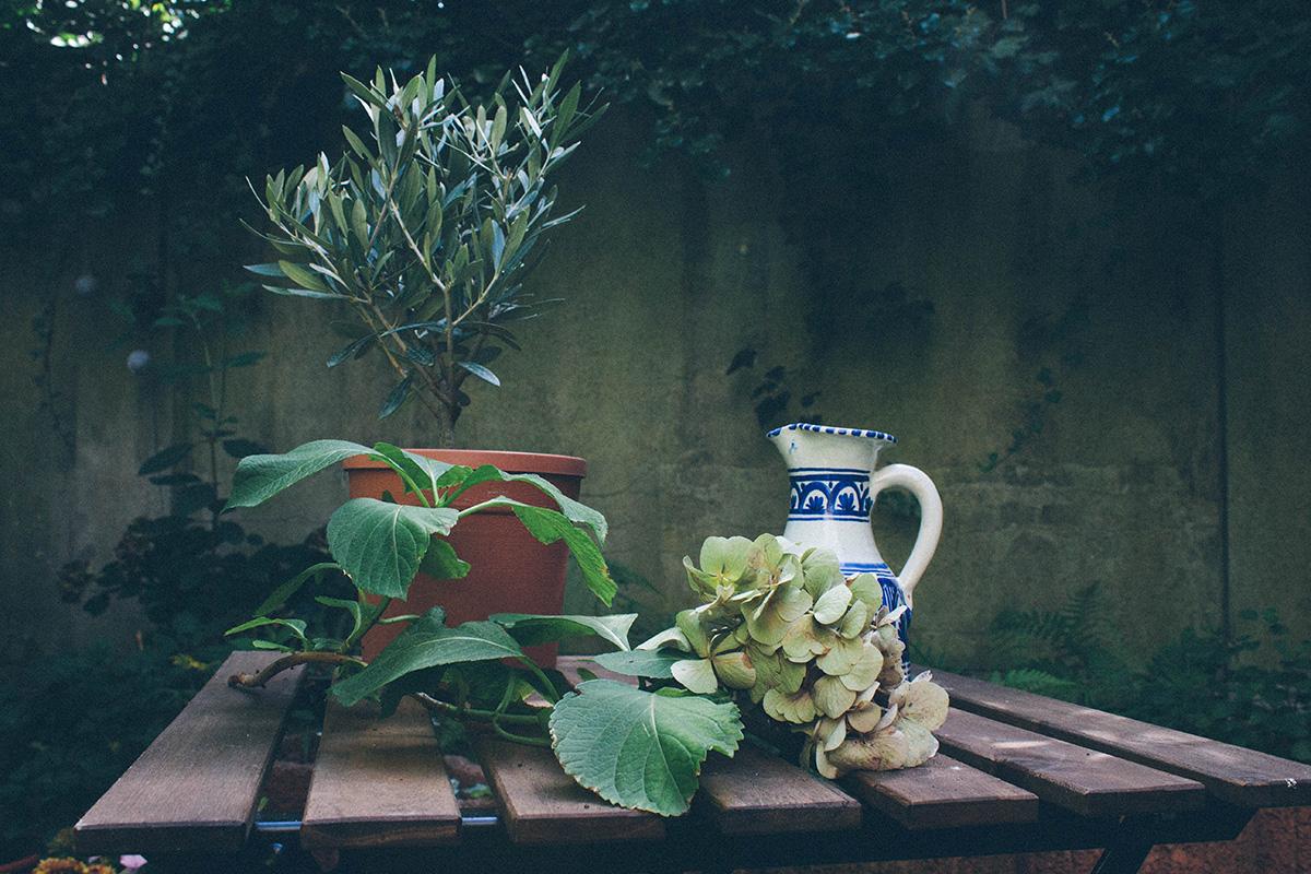 Stillleben in einem Garten – Olivenbäumchen, Hortensienstängel und ein bunter Kruf