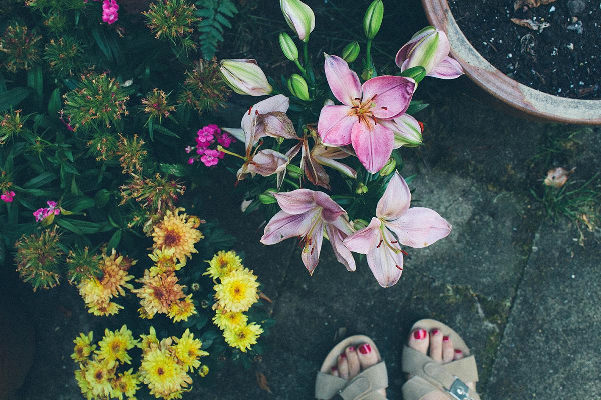 Ein Ausschnitt aus einem Garten – verschiedene Blüten: Bartnelken, Chrysanthemen, Lilien