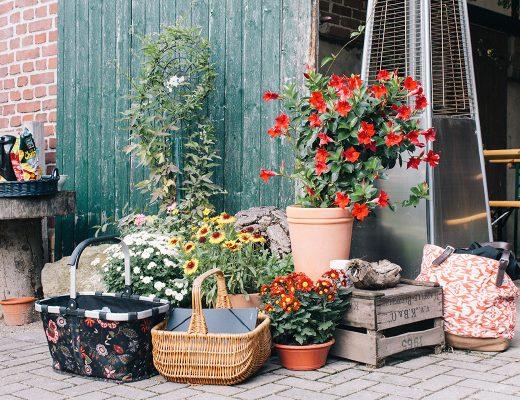 Ein Arrangement aus verschiedenen Blumentöpfen, Steinen und alten Weinkisten vor einer Scheunetür