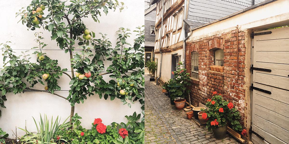 Foto Szene aus Hachenburg Spalierapfelbaum und ein grob gemauerter Kotten in der Stadt mit Fachwerkhäusern