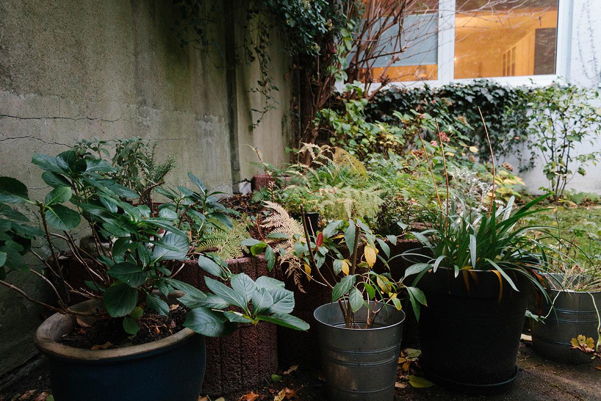 Gartenansicht im Herbst – verschiedene Pflanzen in Kübeln