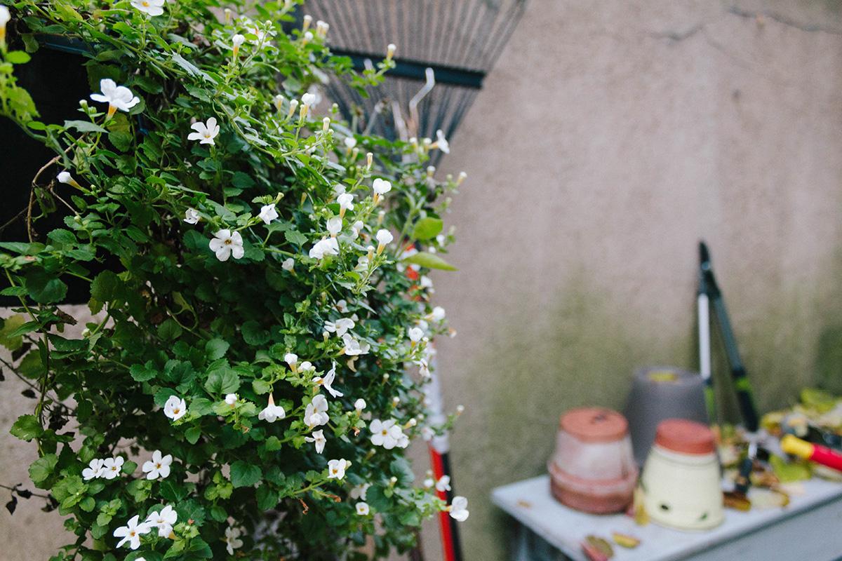 Herbstgarten - letzte Blüher
