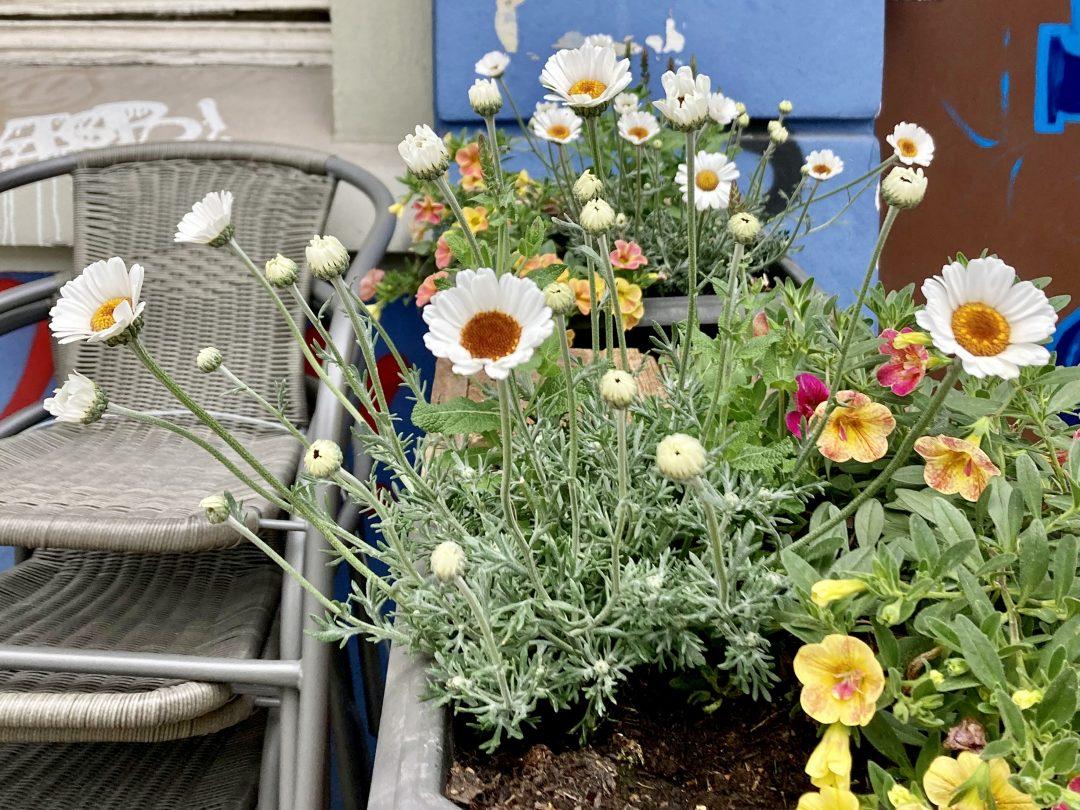 Wildblumen in einem Blumenkasten